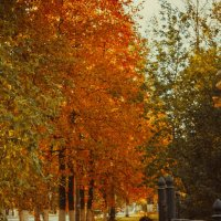 Осенняя пора :: Анастасия Лаптева
