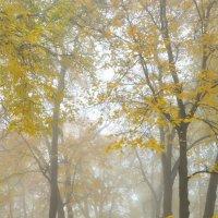 Туман в осеннем парке :: Сергей Тагиров