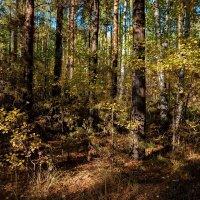 В осеннем лесу. :: Валерий Молоток