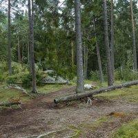 Хельсинки :: leo yagonen