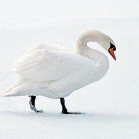 Белая зима. :: Наталья