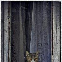 галичский абориген :: Дмитрий Анцыферов