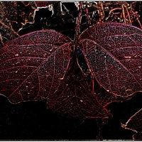 Осенний свет... :: Нина Корешкова