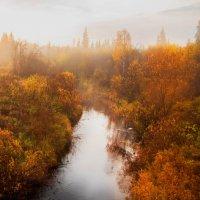 Золотая Осень!Наш Север! :: Лариса Сафонова