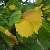 Осенний лист :: Елена Семигина