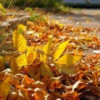 Золотой листопад :: Андрей Заломленков