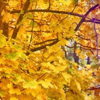 Осень.. :: Ольга Бархатова