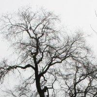 Вот такое  дерево....... :: Валерия  Полещикова