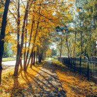 Золотая осень :: Вячеслав Баширов