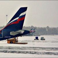 Главное - хвост! :: Кай-8 (Ярослав) Забелин