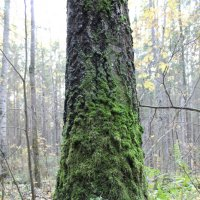 Осень в лесах у Гайвы :: Валерий Конев