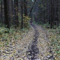 Осень в Прикамских лесах :: Валерий Конев