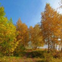 Осенний этюд :: Анатолий Иргл