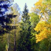 В парке осенью    /7/ :: Сергей