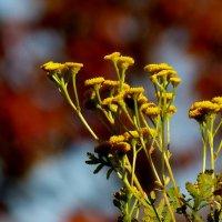 цветы осени 1 :: Александр Прокудин
