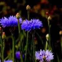 цветы осени 3 :: Александр Прокудин