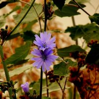 цветы осени 4 :: Александр Прокудин