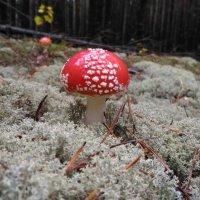 Вот такая красота в лесу :: Оксана Романова