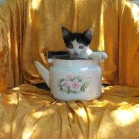 кошачий чай скипел :: Ксения смирнова