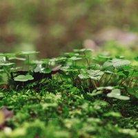 Осенний лес :: Анна Фрошгайзер