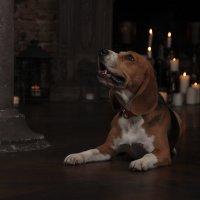 Портрет пса при свечах :: Тата Казакова
