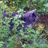 Наш сторожевой кот Барсик :: Наталья Пендюк Пендюк