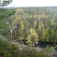 Леса Финляндии :: Марина Домосилецкая