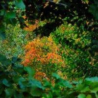 Окно в осень :: Viktor Eremenko