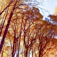 Золотая осень :: Лариса Димитрова