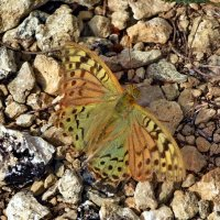 Осенняя бабочка :: Ольга Голубева