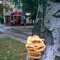 из жизни деревьев (симбиоз) :: Галина Pavel