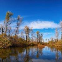 Осень в протоке. :: Виктор Гришенков