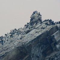 Бакланий остров, Байкал :: Юрий Белоусов