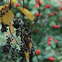 Красно-чёрная осень :: Валерий Чепкасов