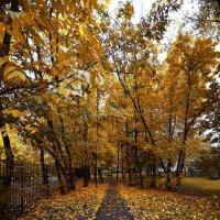 Осенняя дорога :: Александр Сидоров