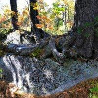 И на камнях растут деревья :: Милешкин Владимир Алексеевич