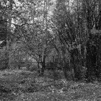 Осенью :: Aнна Зарубина