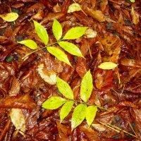 Первый дождь, желтый лист-осень начинается! :: Надежда