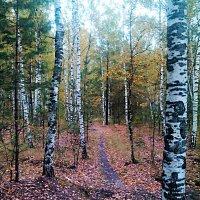 ....в осеннем лесу :: александр дмитриев