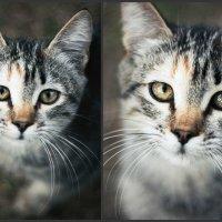 Друг с грустными глазами.... :: Лана Лазарева