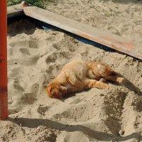 На пляже )))) :: bemam *