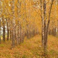 осень. :: petyxov петухов