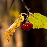 Осень :: Александр Маркелов