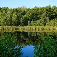 Озеро Плянта :: Ольга Чистякова