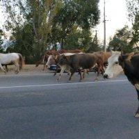 дорога домой.... :: Murat Bukaev