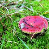 В красной шляпе тот сеньор,только он не мухомор! :: Валентина ツ ღ✿ღ