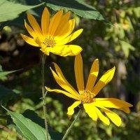 Осенние цветы :: Фотогруппа Весна.