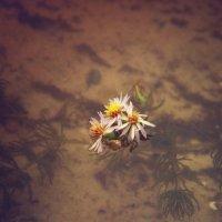 цветы жизни :: Любовь Потравных