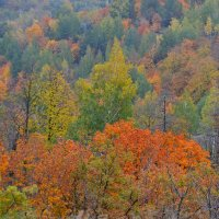 Золотая осень :: Александр Канышев