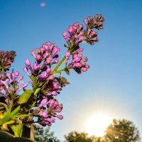 Скучаю по весне :: Света Кондрашова
